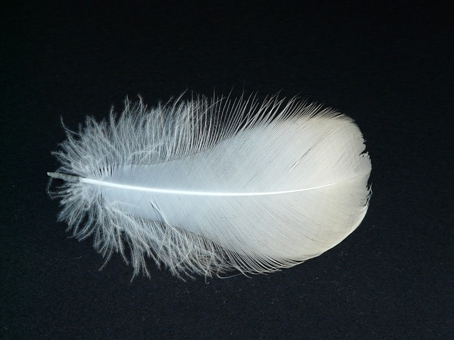 down feather - soft and lofty